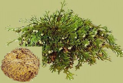 Rose of Jericho Bag with 250 g.
