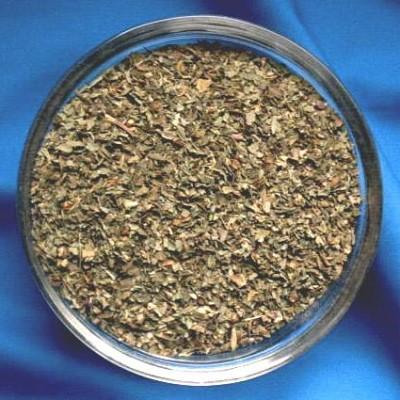 Basilico (Ocimum basilicum)