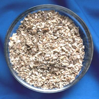 Liebstöckelwurzel (Levisticum officinalis)