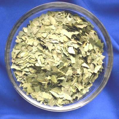 Laurier (Syzygium polyanthum)