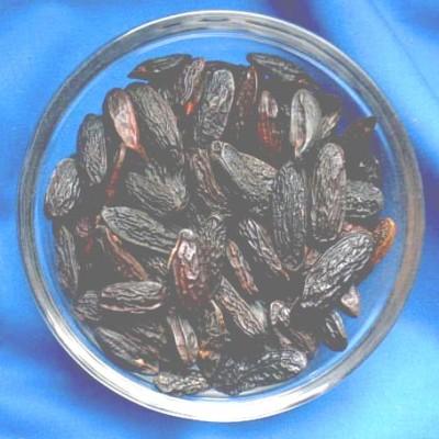 Fèves de Tonka (Coumarouna odorata)