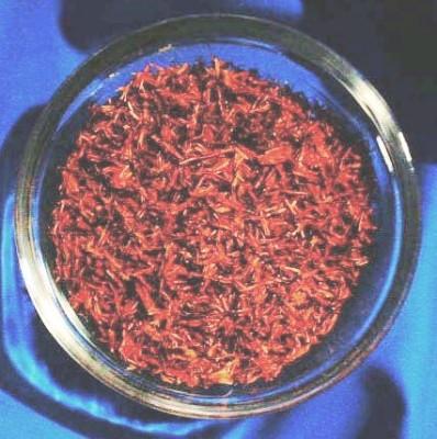 Saffron (Stigma Croci)