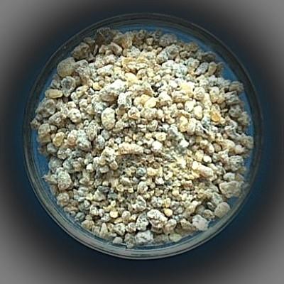 Indian Frankincense (Boswellia Serrata)