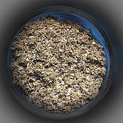 Artemisia comune (Artemisia vulgaris)
