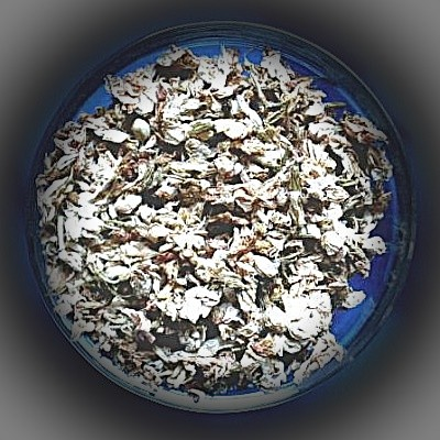 Jasmin (Jasminum sambac)