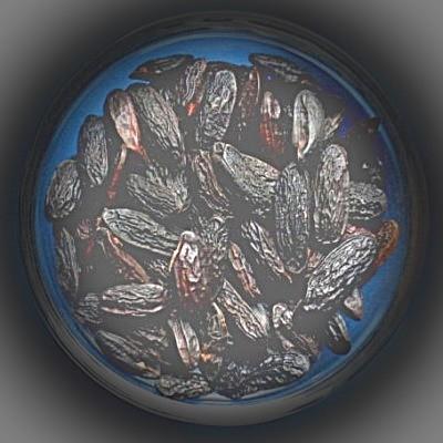 Tonkabohnen (Coumarouna odorata)
