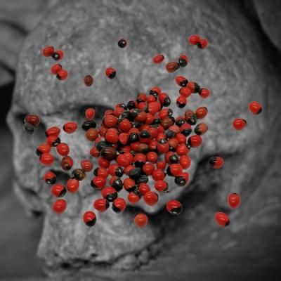 Huayruro seed, devil's eye 25g