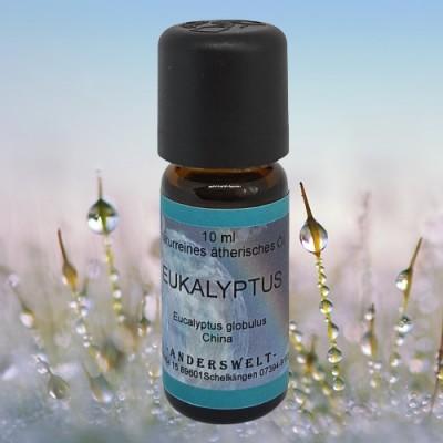 Ätherisches Öl Eukalyptus (Eucalyptus globulus)
