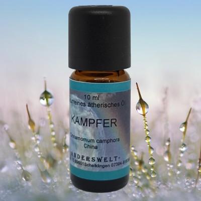 Ätherisches Öl Kampfer (Cinnamomum camphora)