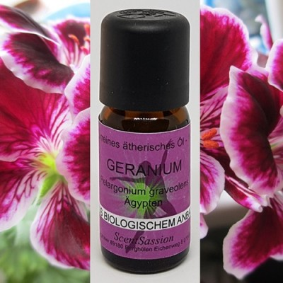 Olio essenziale Geranio Bio (Pelargolium graveolens) 10 ml