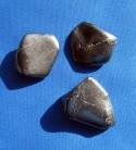 Shungite Tumbled Stone 15 - 25 g