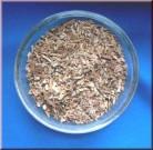 Catuaba (Erythroxylon catuaba)