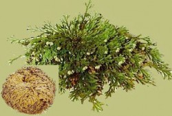Rose of Jericho Bag with 500 g.