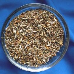 Millepertuis perforé (Hypericum perforatum)