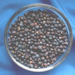 Juniper Berrys (Juniperus communis) Bag with 250 g.