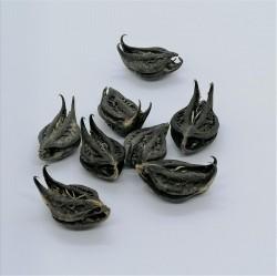 Bat Head Root, Devil Pod, Fledermauskopf Wurzel, Teufelskapsel 10g