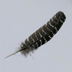 Turky Feather medium