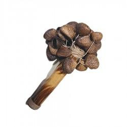 Maracas avec capsules de graines